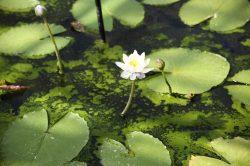 Combattre les algues de bassin